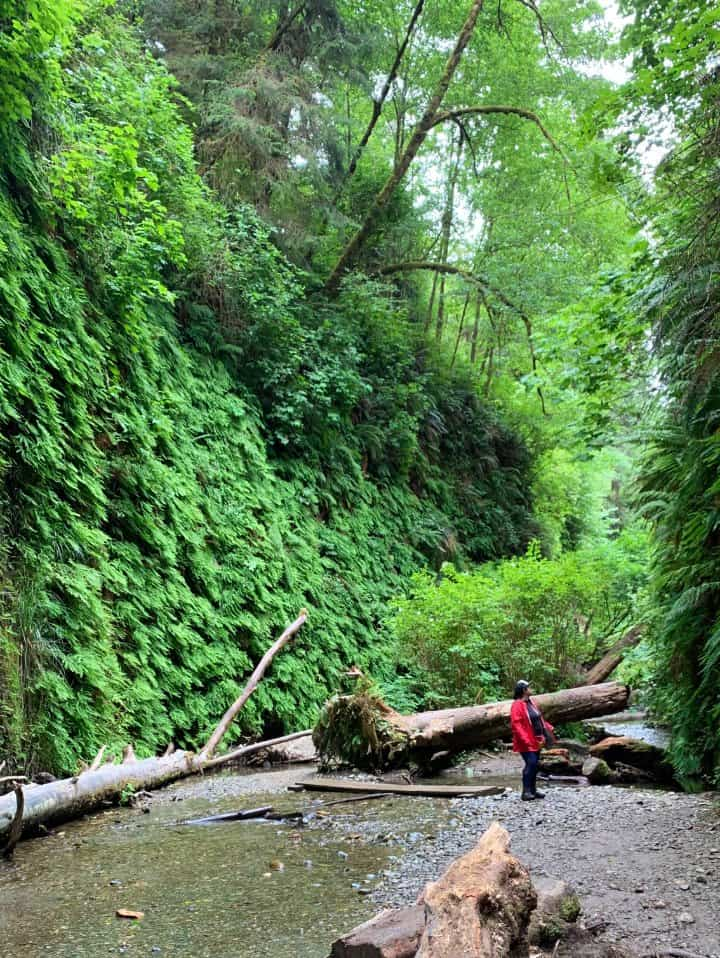 fern canyon hike in Redwood National Park