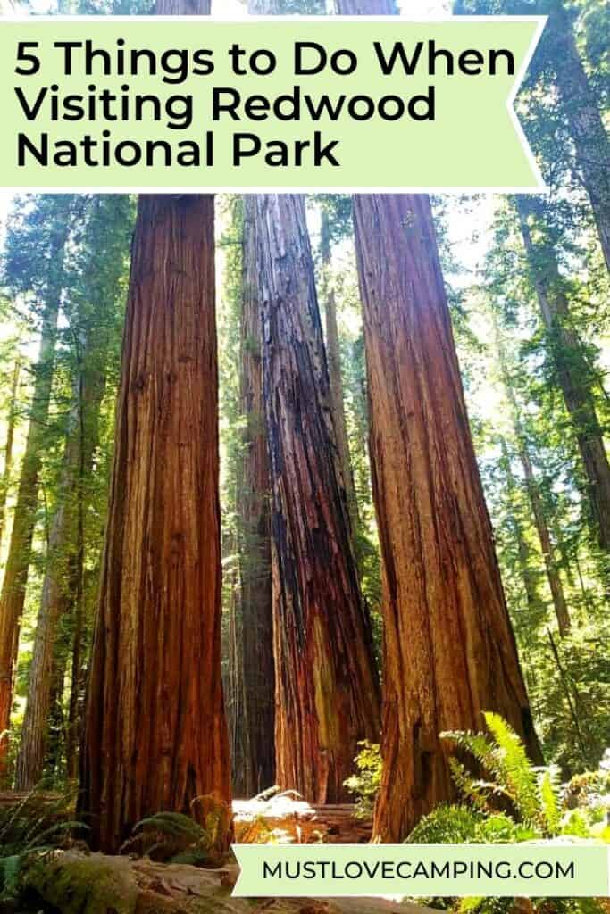 redwood trees in stout grove and graphic