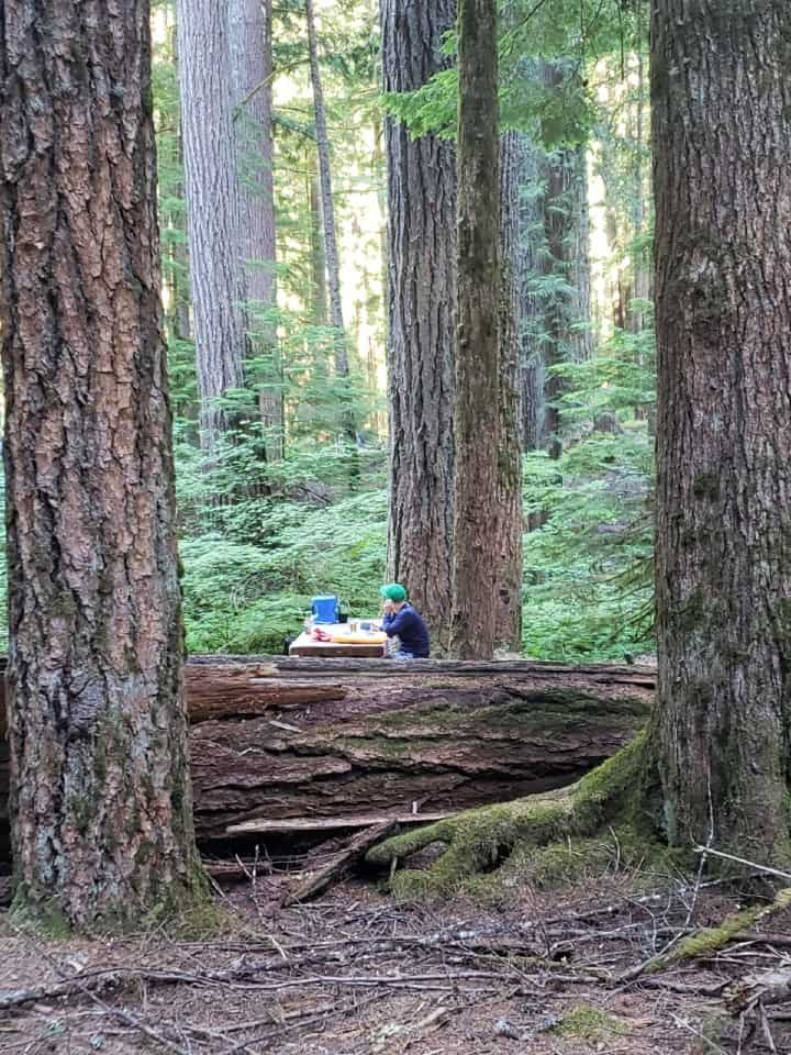 camper sitting at campsite next to tall trees