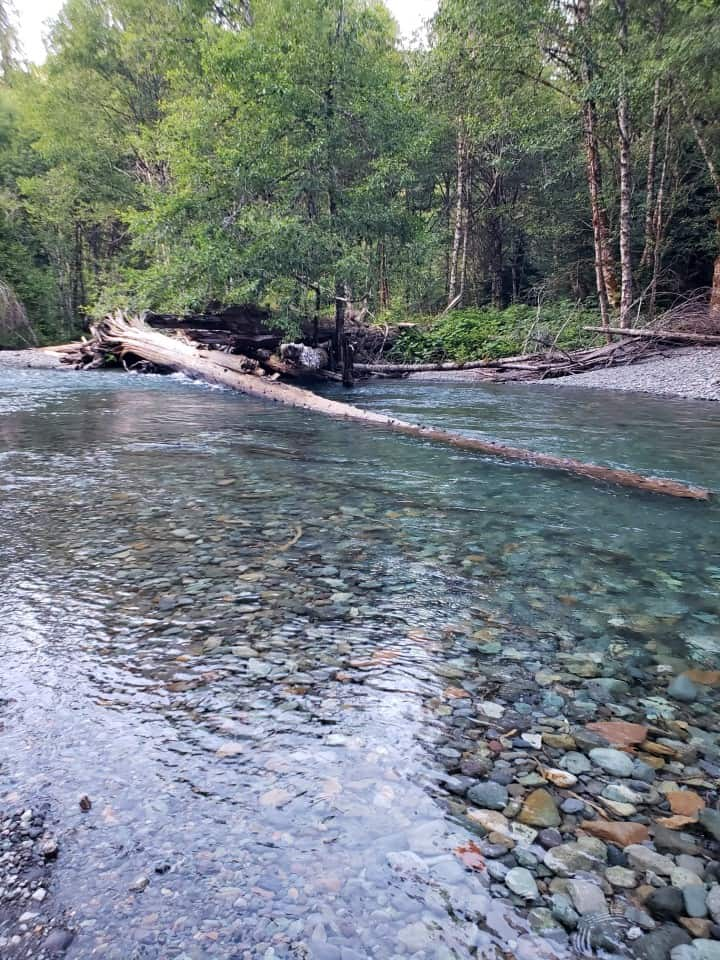 ohanapecosh river in mount rainier national park