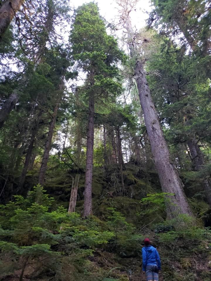 camper standing next to tall douglas fir trees