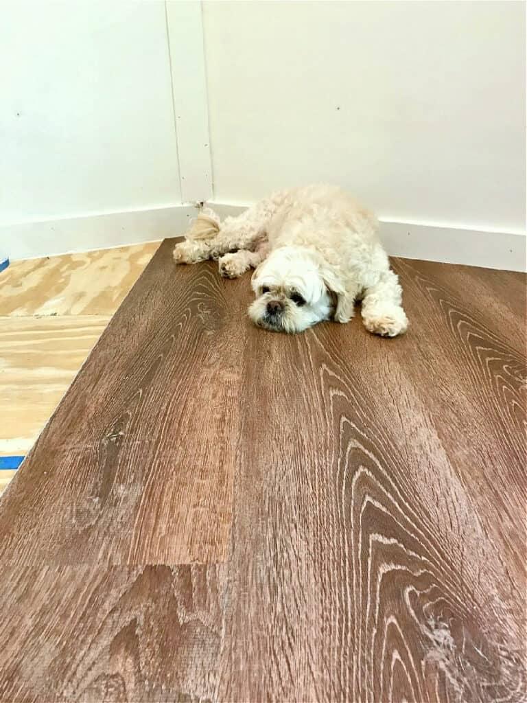 dog laying on vinyl plank floor